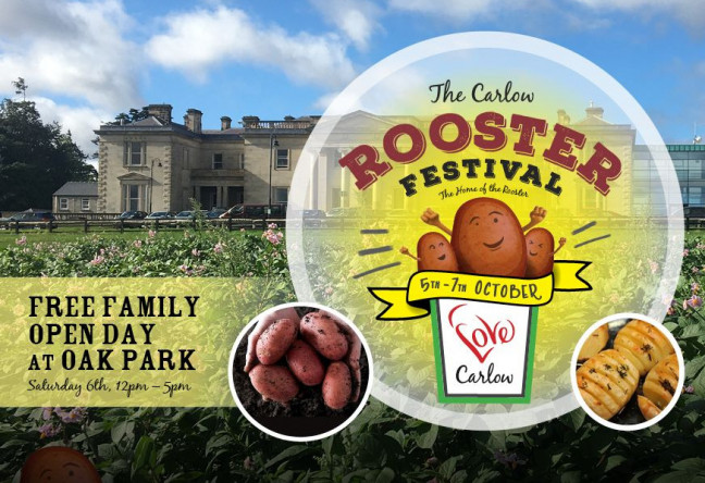 Things to do in County Carlow, Ireland - Carlow Rooster Festival - YourDaysOut