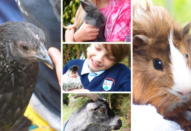 Things to do in County Dublin, Ireland - Farm Pet Parties in Dublin - YourDaysOut