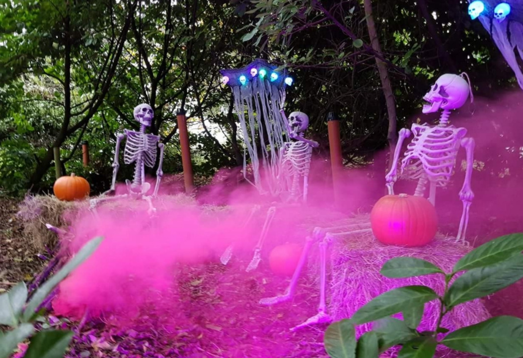 Things to do in County Kildare, Ireland - Halloween Festival |  Clonfert Pet Farm - YourDaysOut - Photo 1