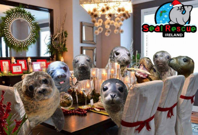Things to do in County Wexford, Ireland - Heal a Seal with a Xmas Meal! - YourDaysOut