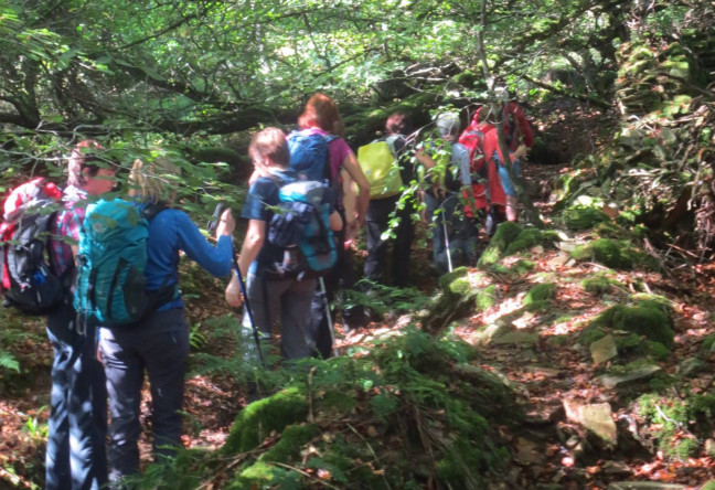 Things to do in County Laois, Ireland - Slieve Bloom May Walking Festival - YourDaysOut