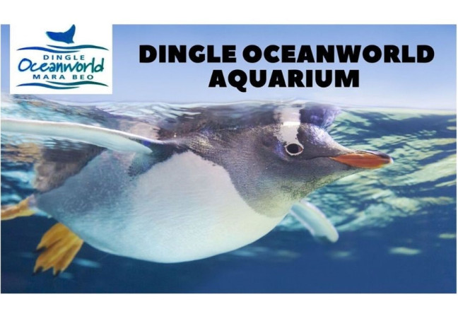 Things to do in County Kerry, Ireland - Dingle Oceanworld Aquarium - YourDaysOut