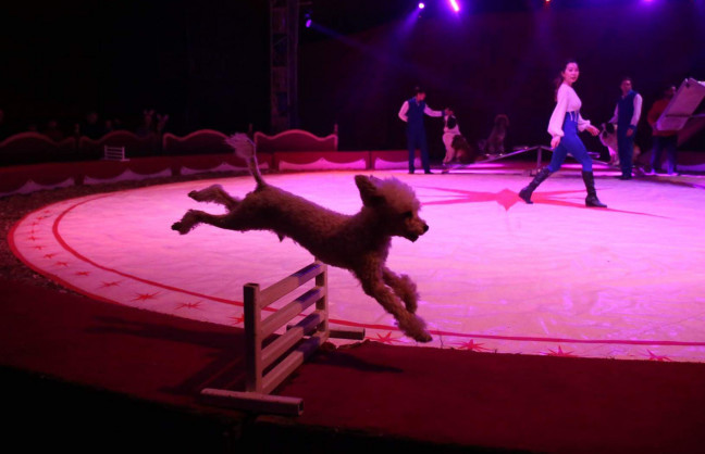 Things to do in Northern Ireland Cookstown, United Kingdom - Duffy's circus Cookstown - YourDaysOut