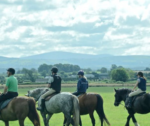 Things to do in County Kildare, Ireland - Abbeyfield Farm - YourDaysOut