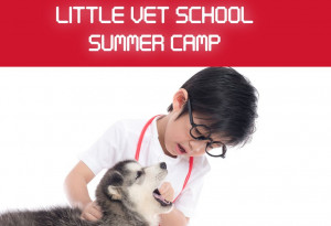 Things to do in County Wexford, Ireland - Little Vet School Summer Camp - YourDaysOut