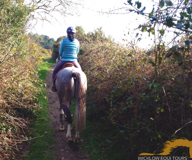 Things to do in County Wicklow, Ireland - Wicklow Equi Tours - YourDaysOut