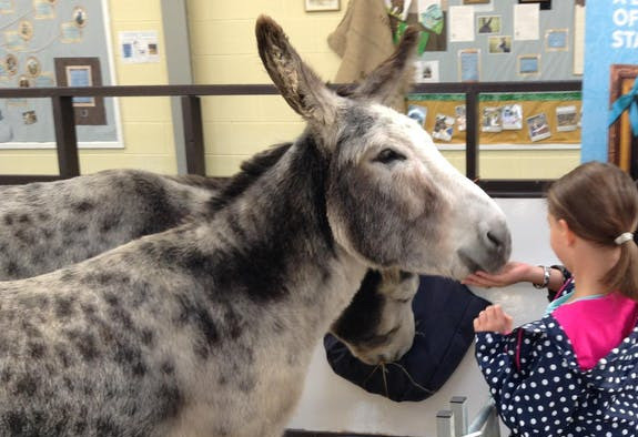 Things to do in Northern Ireland Ballyclare, United Kingdom - The Donkey Sanctuary | Belfast Spring Fair - YourDaysOut
