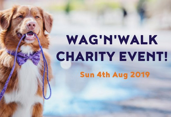 Things to do in County Dublin Dublin, Ireland - Wag 'N Walk Charity Event - YourDaysOut