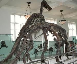 Things to do in New York, United States - American Museum of Natural History - YourDaysOut